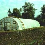 Primul solar de tip finlandez pentru efectuarea de cercetări pentru îmbunătăţirea tehnologiei de înmultirea afinului